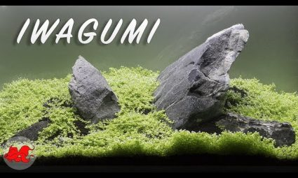 Aquarium Iwagumi aquascaping lepoissonrouge