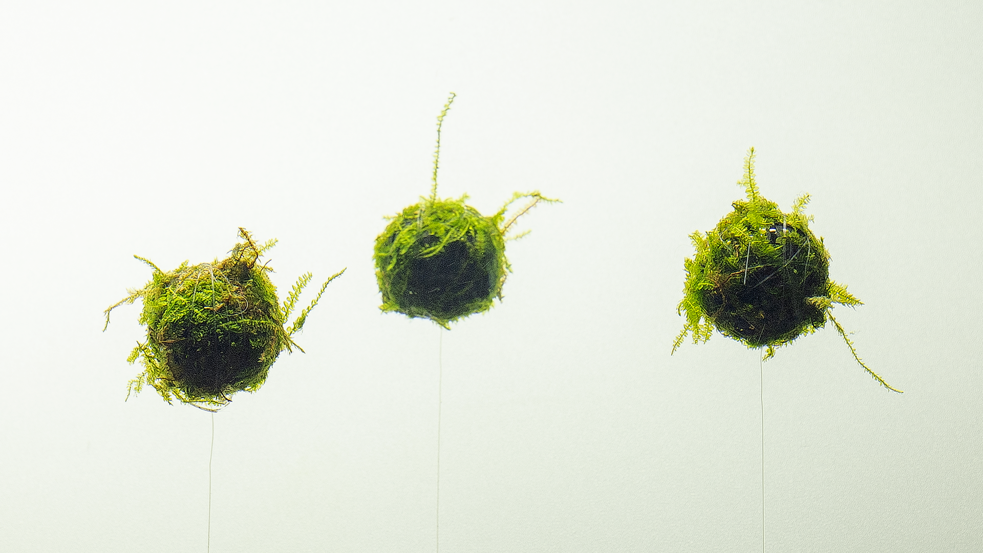 Moss Ball Biosphere aquarium